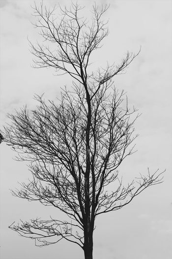 Always alone Tree Trees Tree_collection  Trees And Sky Blackandwhite Blackandwhite Photography Black&white Black And White Collection  Flying Flock Of Birds Bird Animal Wildlife Animals In The Wild Motion Nature Large Group Of Animals No People Animal Themes Day Mammal Outdoors Beauty In Nature Sky