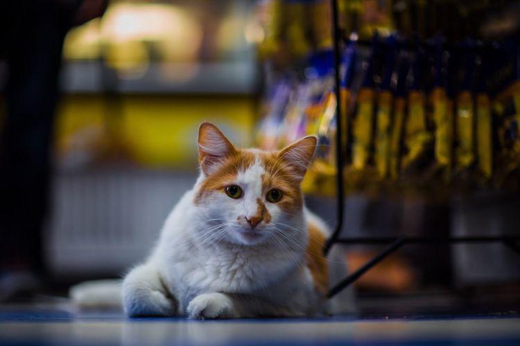 🐱 Cat Bokeh Cat♡ Pet Photography  Eyeempets EeYem Best Shots