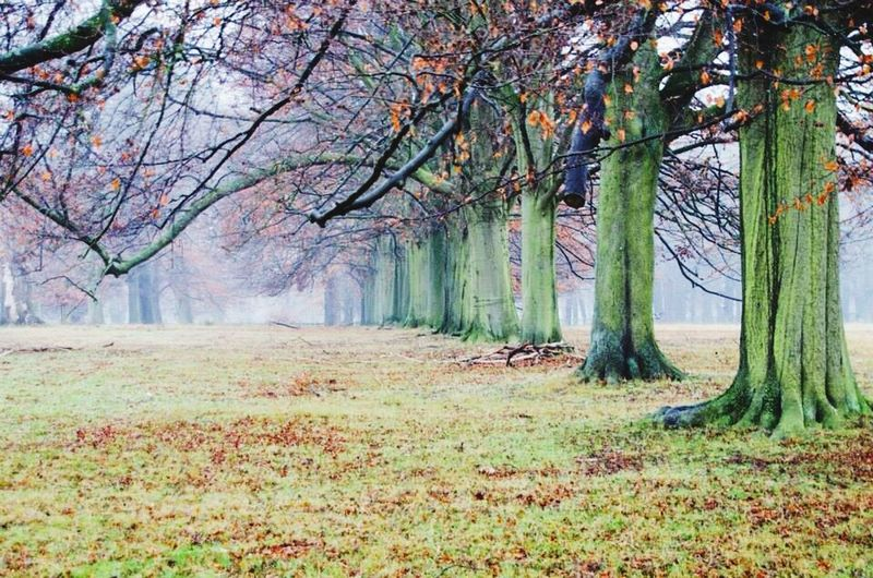 Trees Foggy Winter Wintertime