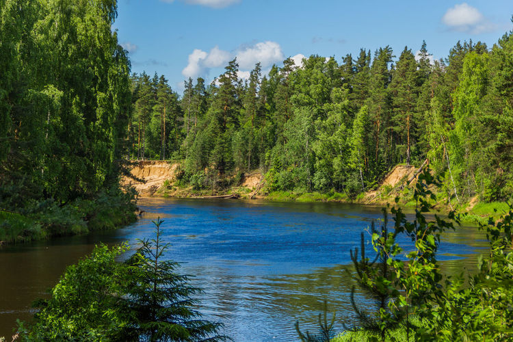 Mologa River flowing in the woods Beauty Beauty In Nature Forest Green Color Growth Idyllic Lake Landscape Natural Parkland Nature No People Outdoors Plant Scenics Sky Travel Destinations Tree Vacations Water Wilderness