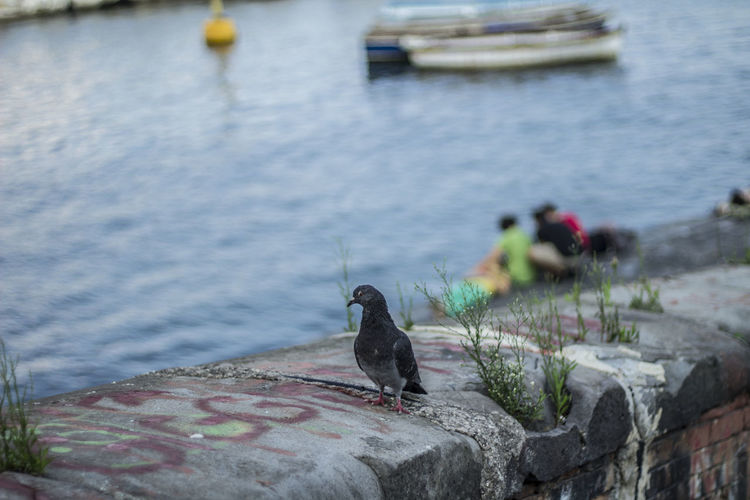 Pigeon in pose. very photogenic Piccione in posa. Molto fotogenico. Animal Themes Animals In The Wild Beauty In Nature Bird Day EyeEm Gallery Focus On Foreground In Pose, Nature Nautical Vessel One Animal Outdoors Photogenic  Sea Streetphotography The Week On EyeEm Tranquility Water Wildlife
