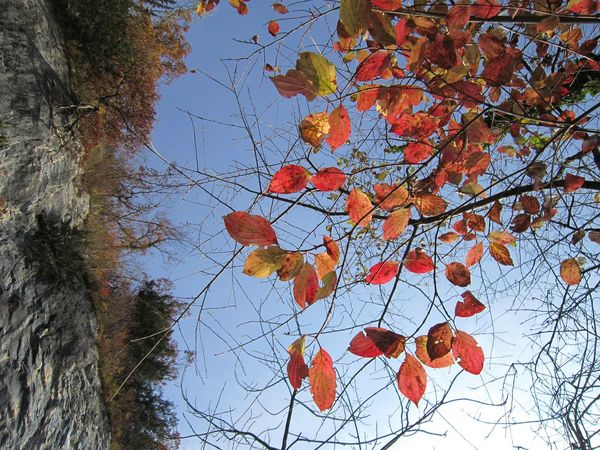 Autumn Bare Tree Beauty In Nature Branch Change Clear Sky Close-up Day Growth Leaf Low Angle View Maple Nature No People Orange Color Outdoors Sky Tree
