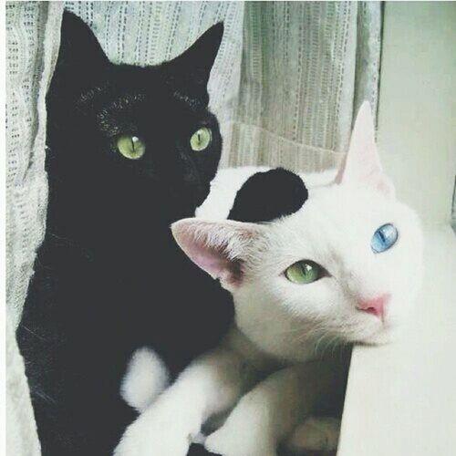 Коты котытакиекоты котэ кот котики котики Meow Meow Meow 🐰🐼❤️🐾🐾🐾❤️ Cat Cat♡ Cats Cat Eyes #Котики - это #Всё😱