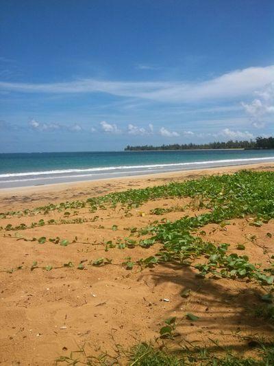 Mi bella isla Puerto Rico