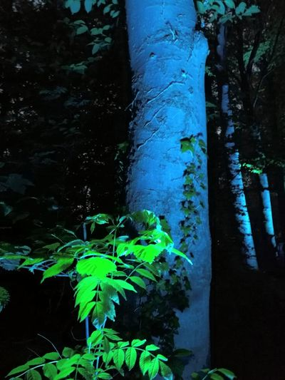 Tranquility Tranquil Scene Tranquillity Black Blue Color Green Blue Night Nightphotography Light And Shadow No People Water Tree Forest Green Color Plant Ivy Blooming Growing Young Plant