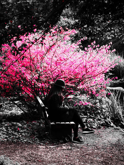 Woman sitting on seat by flowering tree