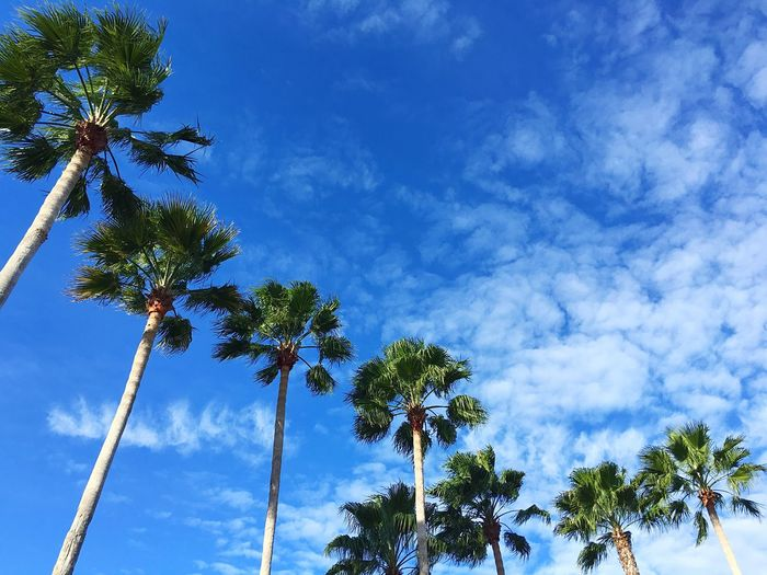 The Curve Palm Tree Tree Cloud - Sky Low Angle View Sky Beach Florida Orlando Curve Clouds And Sky Sky_collection Cloud Blue Green Palm Trees Alignment Nature Tranquility Been There.