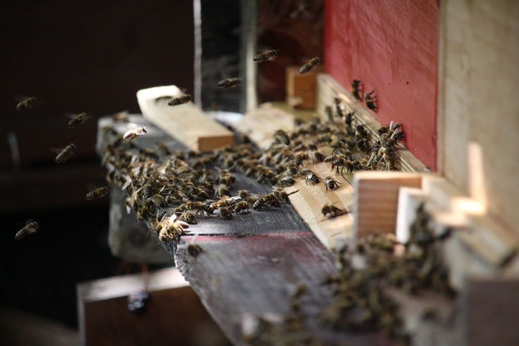 Honey bees on wood
