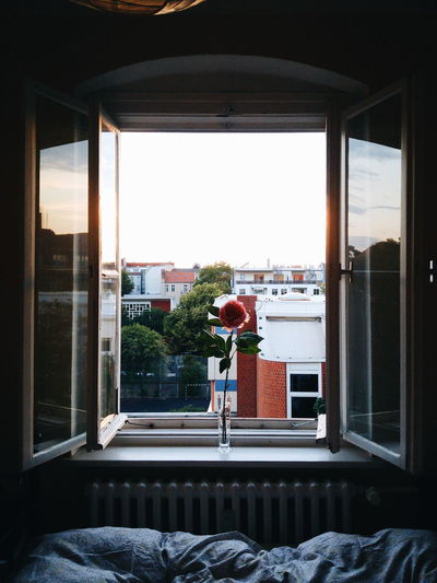 Flower in vase on window sill at home