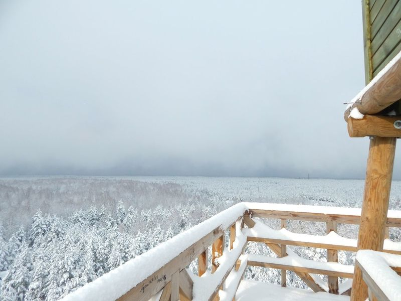 Winter Snow Cold Temperature Nature No People Beauty In Nature Day Outdoors Snowing Tree View Tower Cloud - Sky Winter View Point Latvia Riga Point Of View Forest View From Above Sky Freshness Non-urban Scene Nature