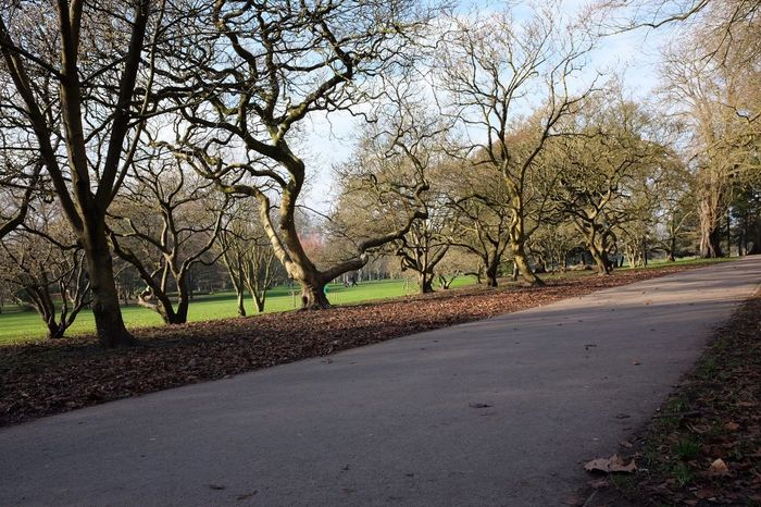 Tree Nature Road Sunlight Bare Tree Outdoors Tranquil Scene Tranquility The Way Forward Scenics Tree Trunk No People Beauty In Nature Day Sun Branch Sky Cardiff Bute Park Park