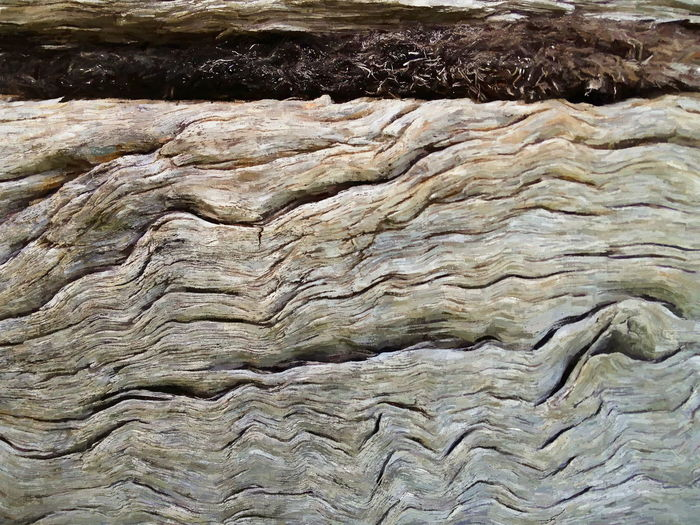 River Redgum Backgrounds Beauty In Nature Brown Close-up Detail Eucalyptus Focus On Foreground Full Frame Macro Natural Pattern Nature No People Old Wood Outdoors Redgum River Red Gum Rough Textured  Timber Tranquility Wood Wood - Material Wooden Wooden Boats Woodgrain