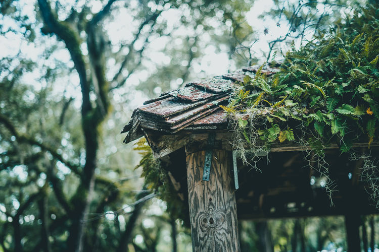 Tree Plant Focus On Foreground Wood - Material Nature Day Growth No People Low Angle View Birdhouse Tree Trunk Trunk Outdoors Branch Built Structure Green Color Close-up Animal Wildlife Architecture Forest Moss Moss & Lichen Fern Morning Freshness