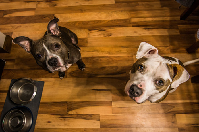 American Bulldog Animal Animal Head  Black Color Bullboxer Staff Canine Close-up Dog Domestic Animals Feed Me! Home Home Is Where The Art Is Mammal No People Pets Portrait Relaxation Snout Dramatic Angles My Year My View