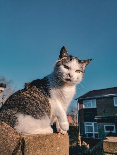 Cat looking away against sky