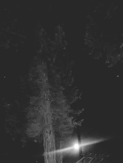 Moon Black And White Photography Moon N Stars Taking Photos Natural Beauty Nature_collection Moon And Trees Moon And StarsMoon N Trees Beautiful In Black And White