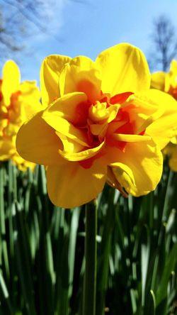 Flowerporn Keukenhof Garden Lizaratravelphotography Walking By Myself Feeling Lucky Amsterdam