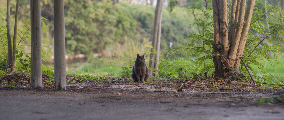 View of a cat amidst trees in forest