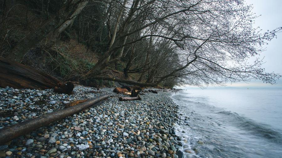 Bare tree on rock at beach