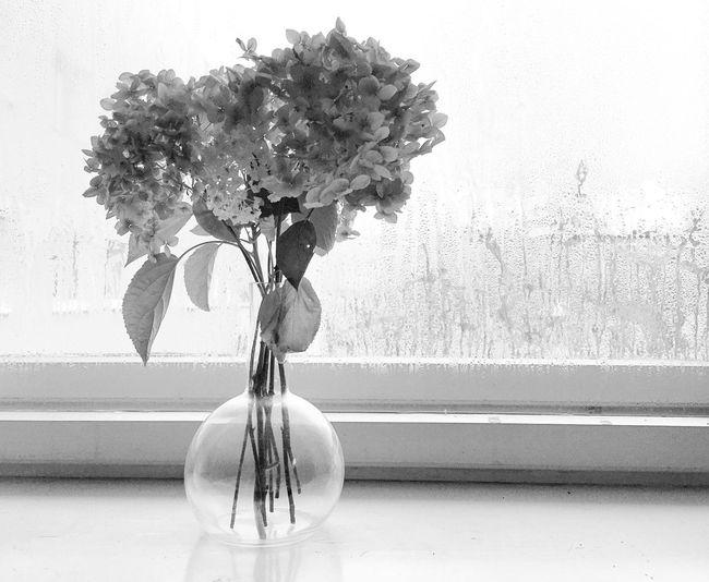EyeEm Selects Flower Window Vase Bouquet No People Flower Head Plant Nature