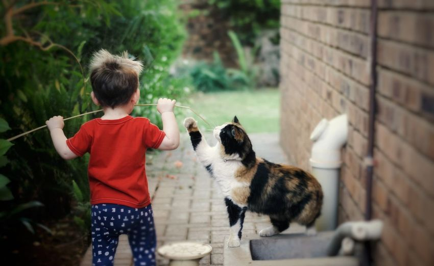 A little boy and his cat. Nikon 50mm Calico Fluffy Cat Boy Childhood EyeEm Selects Pets Child Childhood