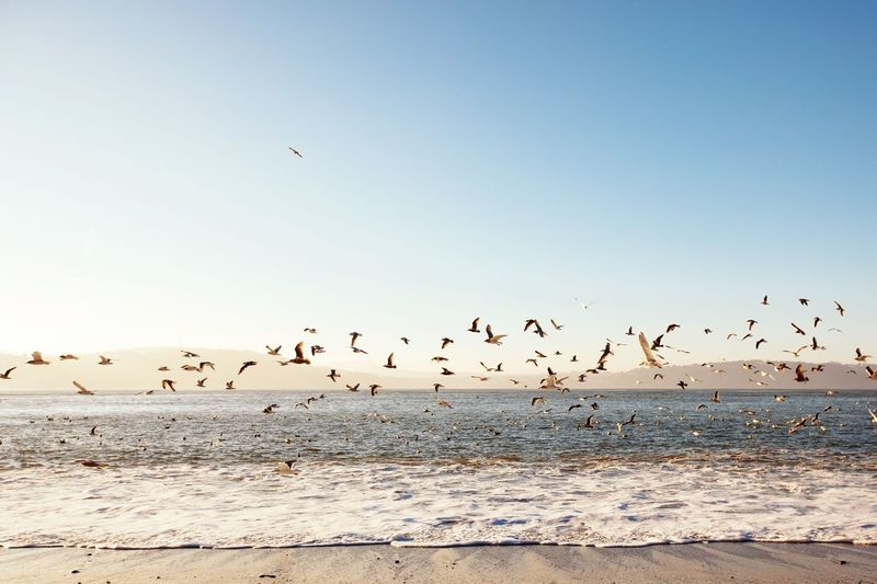 Flock Of Birds Ocean Waves Fly Away Hundreds The Great Outdoors - 2015 EyeEm Awards Group Seagull Beach Rogue The 2015 EyeEm Awards Finalists