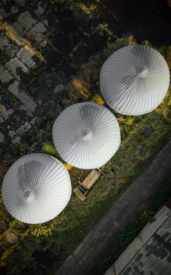 High angle view of white mushrooms