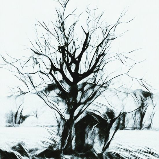 Bare Tree Tree Nature No People Tranquil Scene Day Outdoors Beauty In Nature