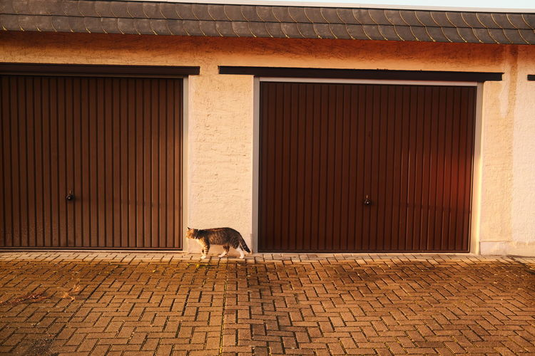 Cat on footpath against building