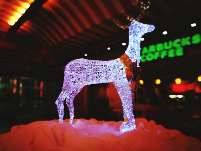 Christmas Decoration Christmas Time Mobilephotography Huwaei Photography Huwawie P9 HuaweiP9 Chirsmas