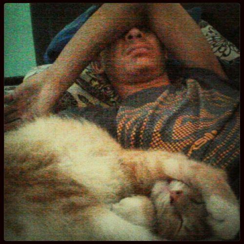 lepas puas bergurau ni la kesudahannya So Tried Sweetdreams  Sleeping Cat