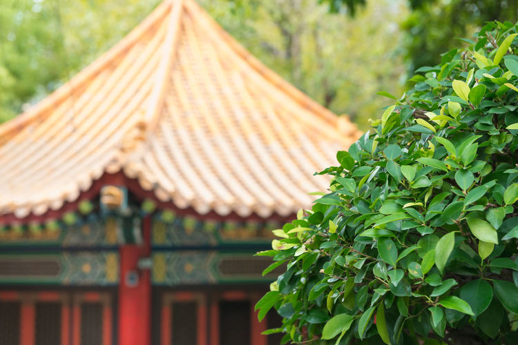 Architecture Roof Built Structure Focus On Foreground Plant Leaf Nature Day Plant Part Green Color No People Building Exterior Building Growth Tree Outdoors Religion Place Of Worship Roof Tile Oriental Asian Culture
