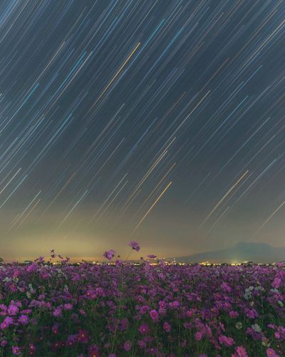 EyeEmNewHere Startrails Star Cosmos Flower Flower Flowering Plant Beauty In Nature Plant Star - Space Scenics - Nature Sky Nature Night Field Galaxy Space Landscape Purple Astronomy Land