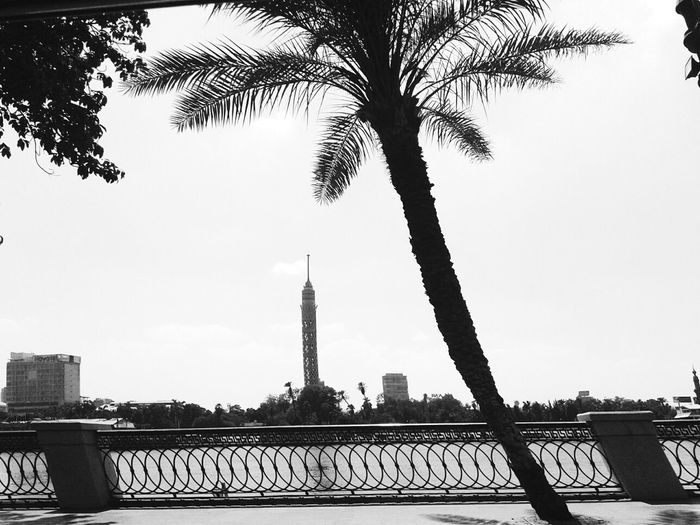 Egypt Cairo Tower Cairo Egyptphotography Egyptian Place First Eyeem Photo Palm Tree Nile River Blackandwhite Mobliephotography Everydaycairo
