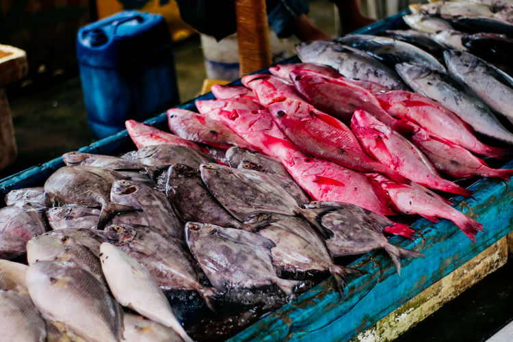 Food Food And Drink Freshness Seafood Fish For Sale Market Animal Vertebrate Close-up Raw Food Retail  No People Fish Market Healthy Eating Wellbeing Day Meat Market Stall Sale Fishing Industry Retail Display Consumerism