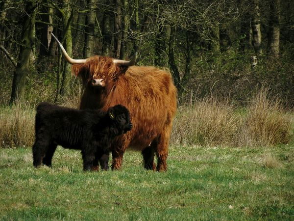 Cow Nature Photography Nature Natural Beauty Nature_collection Naturelovers Hair Wildlife Wild Cows Koe