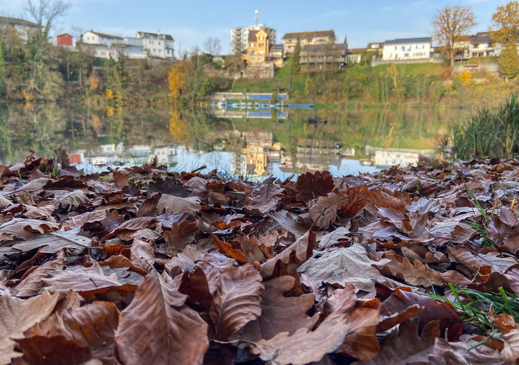 Scenic view of autumnal leaves by lake