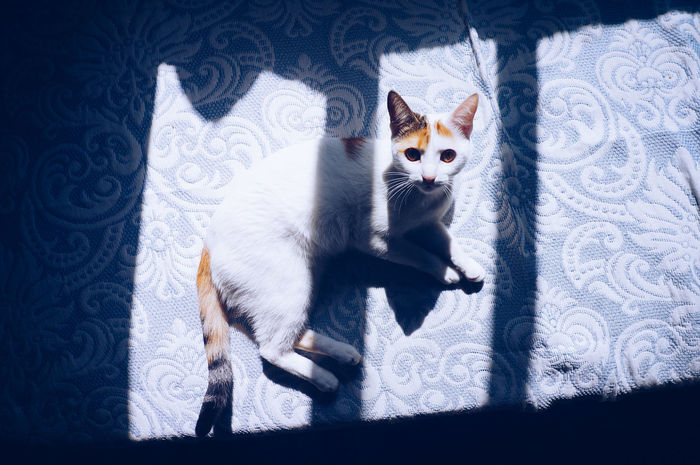 Into the Light 🐈 📸 Light And Shadow Geometric Shape Shape Curves Into The Light Light And Shadows Light Effect Illuminated Posing Cat Cats Cat Lovers Cat Lover Beautiful Beauty Looking At Camera Cat Portrait Shadowy Pet Portrait Mobilephotography Shootermag AMPt_community Vscocam