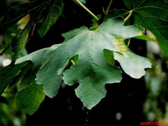 Buona giornata e che il verde ci porti ..... primavera !!! Foglie Natural Beauty Verde Verde Speranza Green Color
