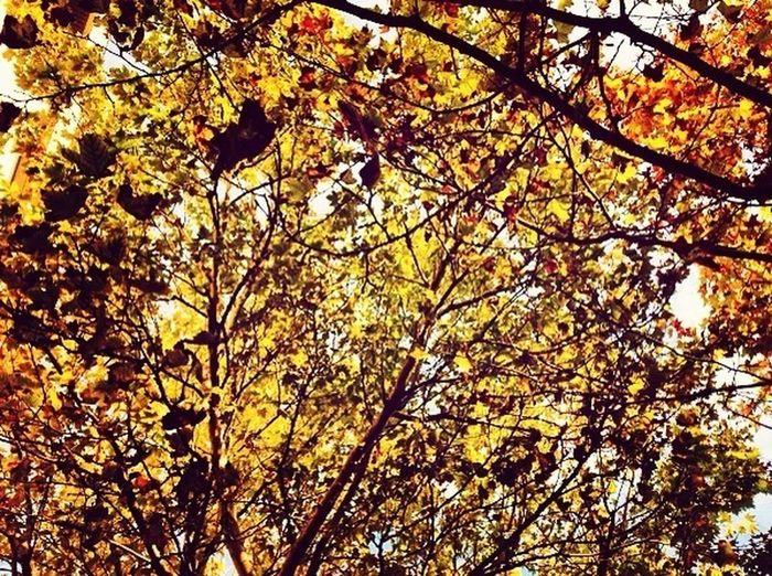 Urban Nature
