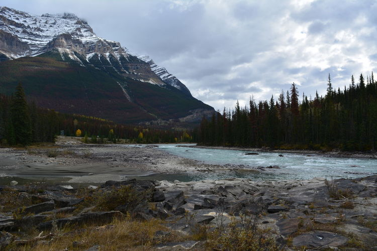 Jasper National Park Jasper Icefields Parkway Athabasca Falls Athabasca River Canada British Columbia Alberta Cloud - Sky Mountain Water Sky Beauty In Nature Nature Plant No People Scenics - Nature Tranquil Scene Land Tranquility Landscape Day Non-urban Scene Mountain Range Outdoors