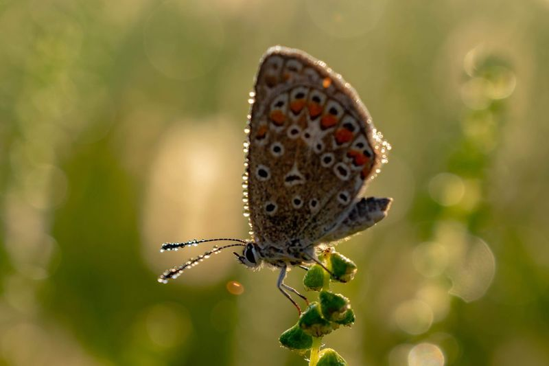 Dew on wings EyeEmNewHere Nature Photography Sunrise Dawn Full Length Spread Wings Butterfly - Insect Insect Close-up Animal Themes Plant Animal Wing Animal Antenna