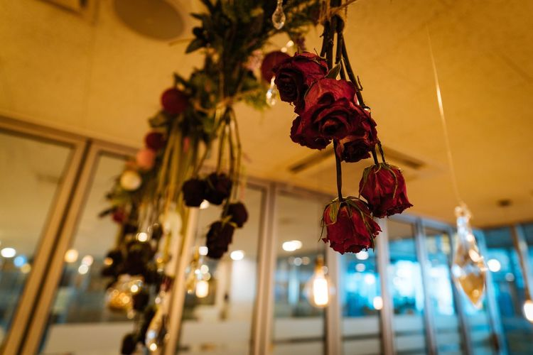 Hanging Low Angle View Decoration Lighting Equipment Illuminated Focus On Foreground Indoors  Celebration Home Interior Close-up Light Bulb Built Structure Night Architecture Dryflower Redrose