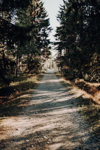 Forest Road Tree Plant Direction Road No People Dirt Dirt Road Nature Transportation The Way Forward Day Forest Land Absence Outdoors Non-urban Scene Diminishing Perspective Tranquility Tranquil Scene Sky Dirty