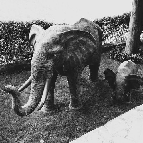 Elephant Animal Themes Animals In The Wild Mammal Animal Trunk No People Animal Wildlife Outdoors Nature Day Tusk Trunk