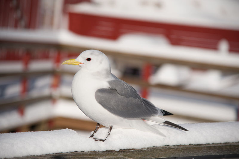 Close-up of seagull perching outdoors