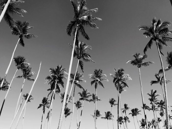 Black & White Blackandwhite Palm Tree Low Angle View Tree Growth Nature Day No People Beauty In Nature Sky Outdoors Tranquility Clear Sky Colour Your Horizn