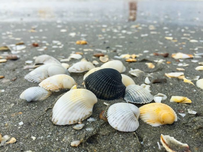 Black seashell among white seashells on the beach Summer Beach Sea Seaside Shells Seashells Sand Water Waves Different Black Seashell Shore Tropical Nature