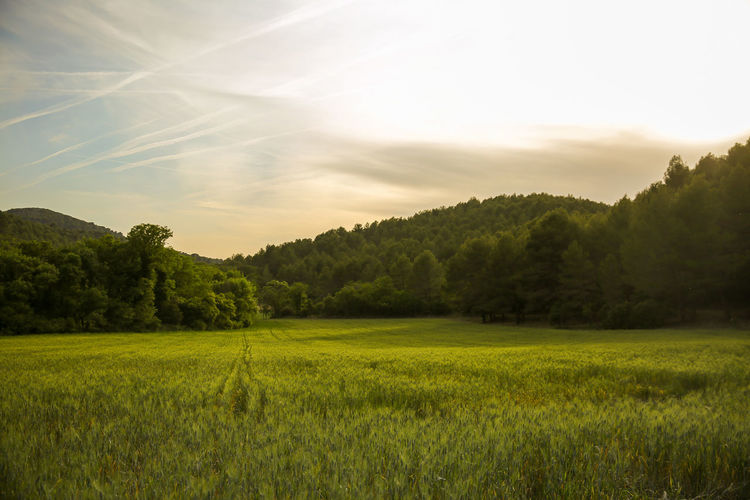 Beauty In Nature Cloud - Sky Field Grass Green Landscape Nature Outdoors Rural Scene Sky Sunset Tranquil Scene Tranquility Tree