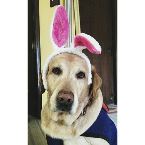 Ozzy wishes y'all a very Happy Easter! Happyeaster Ozzy4president Vscocam Vsco_hub Petsofinstagram Pawsomepets_ Dogsofinstagram